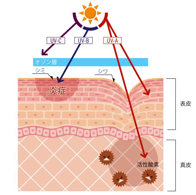 紫外線の影響